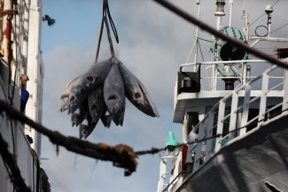 Can the world unite to combat illegal fishing?